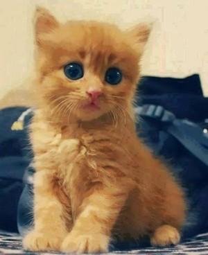 CUTE LIL बिल्ली के बच्चे