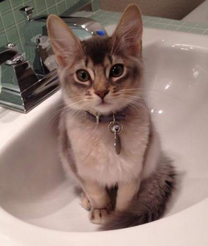 Check out this adorable kitten named Biscotti.