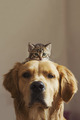 Dog and Kitten  - dogs photo