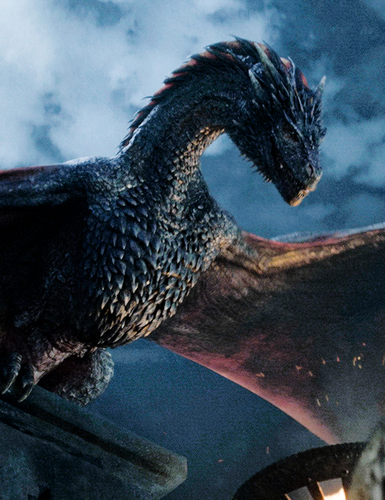 game of thrones wallpaper with a homing pigeon titled Drogon - Season 5