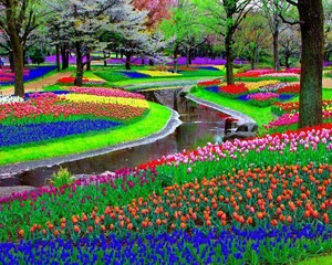 Keukenhof the Garden of 欧洲