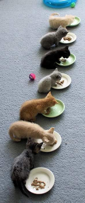 Kittens...because we can't get enough of kitten pics.