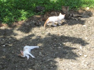 Mace i macka