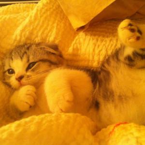 Meredith 3