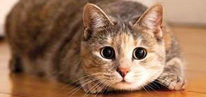 OMG, those eyes!