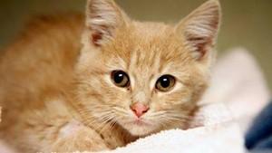 SINBAD Котята Кошки