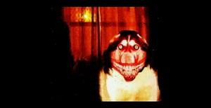 Smile.Dog.....