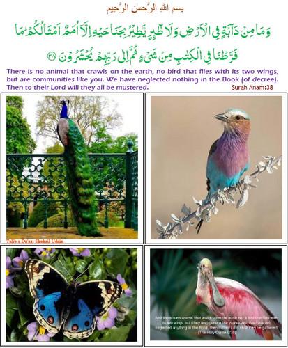 Islam wallpaper entitled Surah Anam : verse 38
