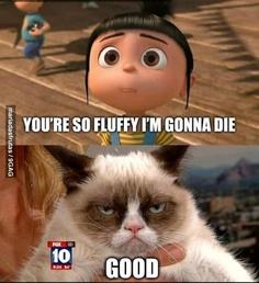Very Evil Cat