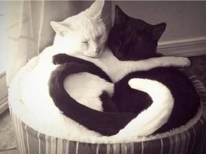 WHITE N BLACK Gatti