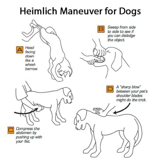 how to apply the heimlich maneuver If someone nearby was choking on an object would you know what to do the heimlich maneuver, or abdominal thrusts, involves standing behind the person and pushing up into the abdomen to.
