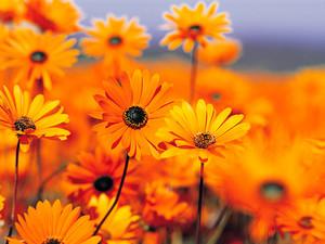 fleur art d