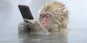 monki mobile