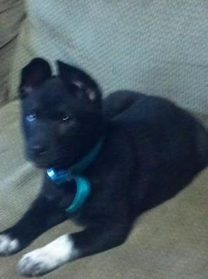 my dog Athena