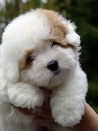 naseem teddy