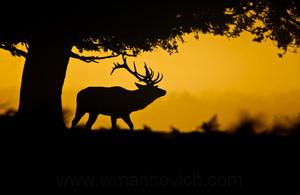 stillout deer