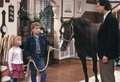DJ's Very First Horse