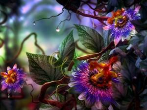 कल्पना फूल
