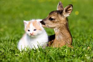 Kitten and cerbiatto, fawn