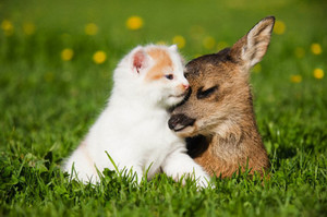 Kitten and adular, fawn