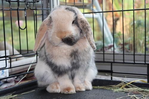 Forum Resume Rabbit