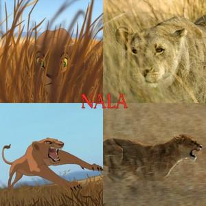 Nala hunting