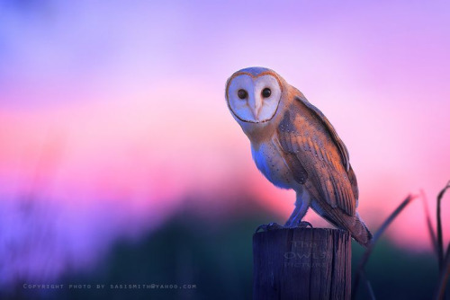 Animals wallpaper titled Owl