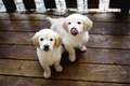Puppies           - dogs photo