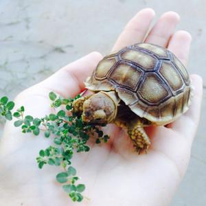 rùa, con rùa