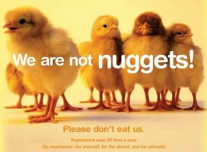 We are Not Nuggets!