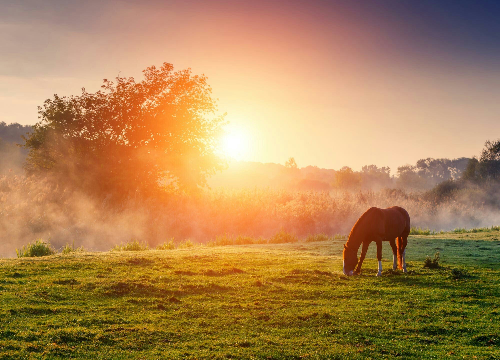 download wallpaper horses sunset - photo #20