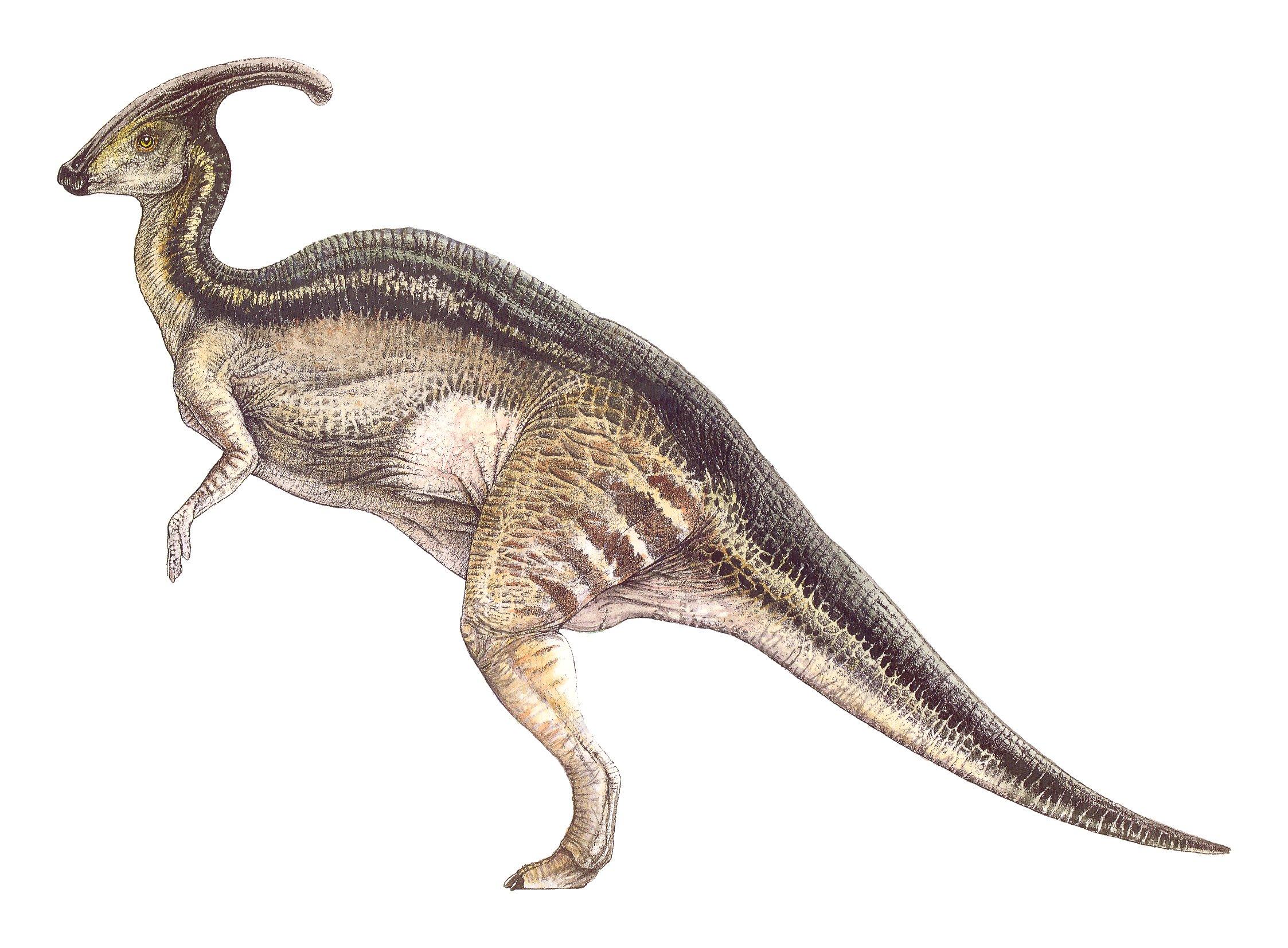parasaurolophus - Jurassic Park Photo (38425221) - Fanpop