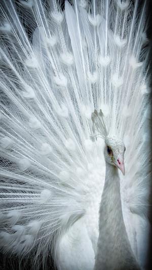 pretty white bird