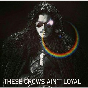 These Crows ain't loyal