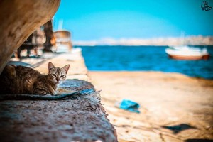 kucing IN THE pantai SEA