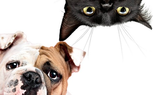 animali wallpaper titled Cat and Dog