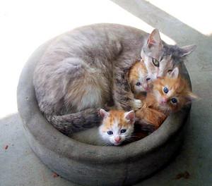 Cat and gatinhos