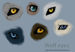 Different kinds of lobo eyes