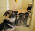 Dog and Puppies  - dogs photo