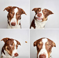 Dog              - dogs photo