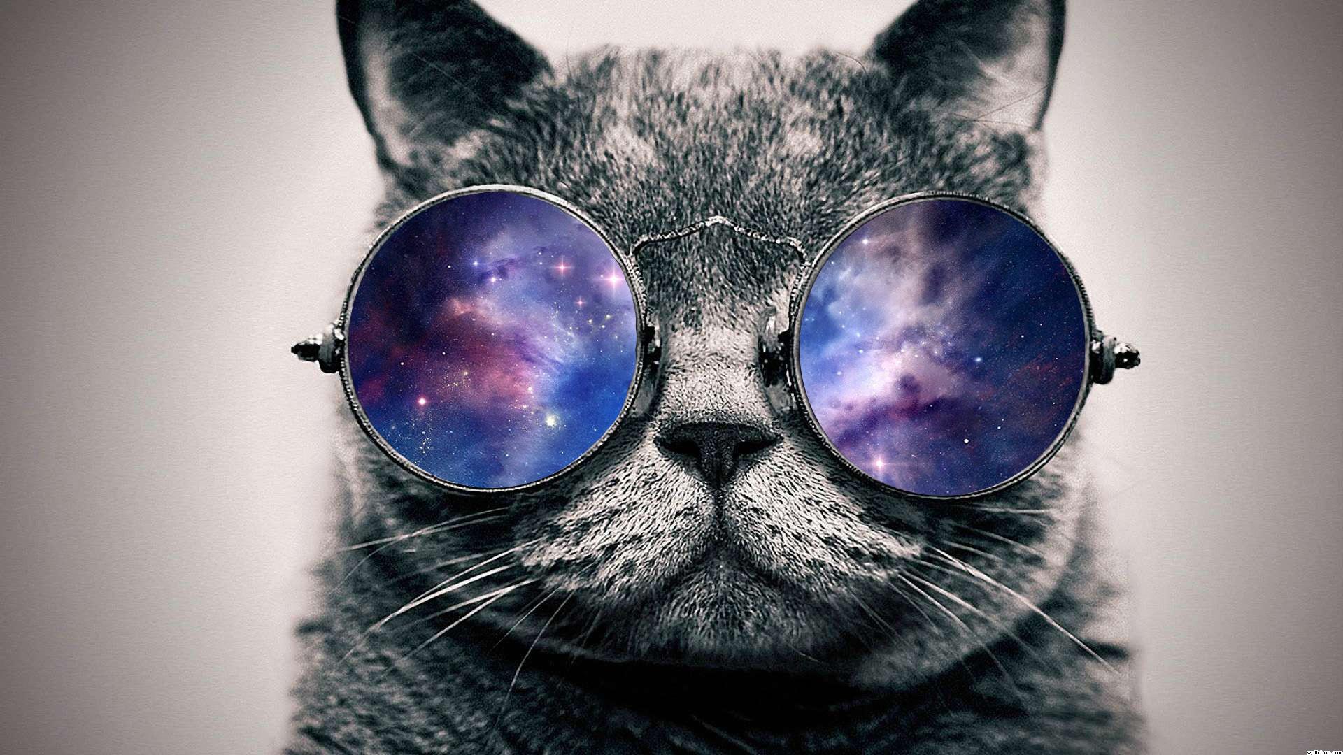 Epic cat