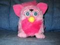 Furby Babies 1999 - furby photo