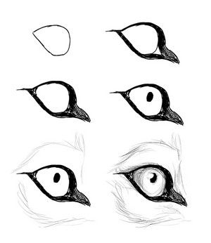 Instructions to drawing lobo eye