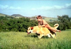 Kevin Corcoran as Arliss Coates in Old Yeller
