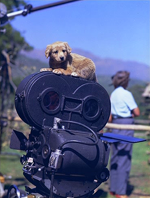 Old Yeller - Behind the Scenes