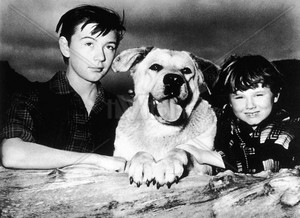 Old Yeller Portrait - Tommy Kirk, Spike and Kevin Corcoran