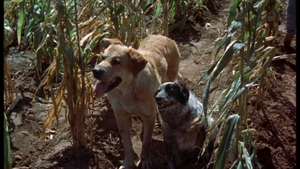 Old Yeller and Miss Priss