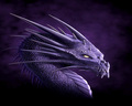 Purple Dragon - dragons fan art