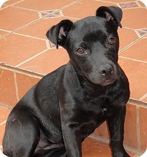 Shadow, my puppy!