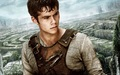 The Maze Runner - dylan-obrien wallpaper